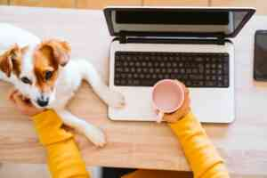 young woman working on laptop at home, wearing protective mask, cute small dog besides. work from home, stay safe during lockdown